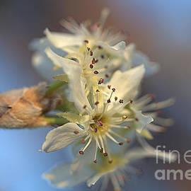Macro tiny flowers by TeAnne Pantony