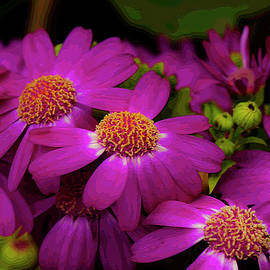 Magenta Daisies Extravaganza by Jennette Lau