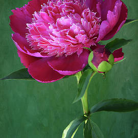 Magenta Double Peony by Isabela and Skender Cocoli
