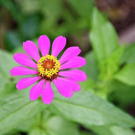 Magenta Wildflower by Sally Weigand
