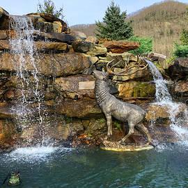 Maggie Elk by Stephanie Leavens