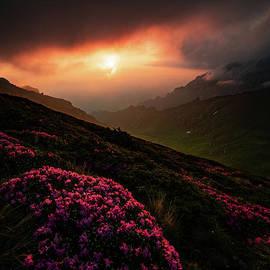 Magic pink rhododendron  by Eduard Mihai Bunghiuz