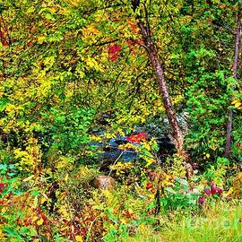 Magical Forest by Shelly Wiseberg