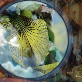 Magical Iris by Diane Stevens