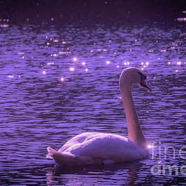 Magical Swan by Linda Howes
