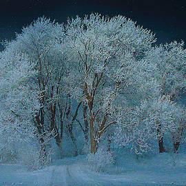 Magical Winter Night