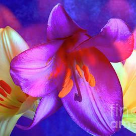 Magnificent Lilies # 1. by Alexander Vinogradov