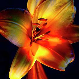 Magnificent Lilies # 2. by Alexander Vinogradov