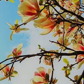 Magnolia Bloom by Loretta S