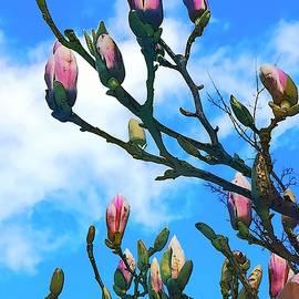 Magnolia Buds Splendor by Loretta S