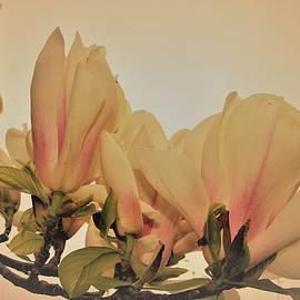 Magnolia Duo by Loretta S