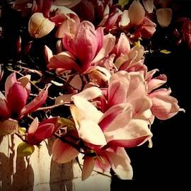 Magnolia  Glory by VIVA Anderson