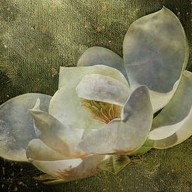 Magnolia Gold by HH Photography of Florida