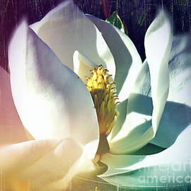 Magnolia Macro by Trudee Hunter