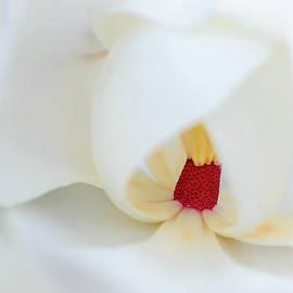 Magnolia Stamen