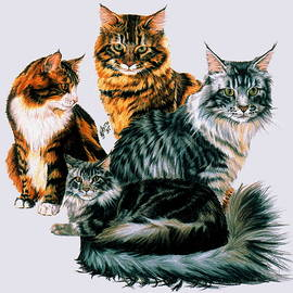 Maine Coon Collage by Barbara Keith