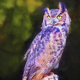 Majestic Great Horned Owl Portrait by Sharon McConnell