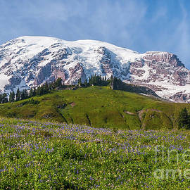 Majestic Mount Rainier by Marv Vandehey