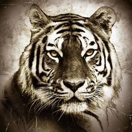 Majestic Tiger  by Grace Iradian