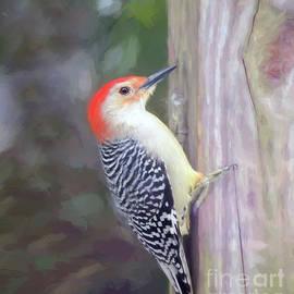 Male Red-bellied Woodpecker by Kerri Farley