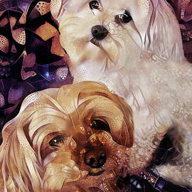 Maltipoo Times Two - The Love Bugs by Peggy Collins