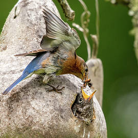 Mama Feeding Her Young by Robert J Wagner