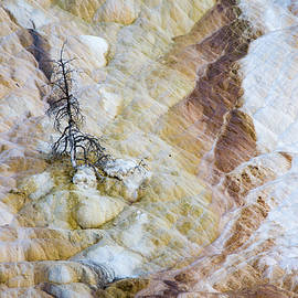 Lonely at Mammoth Hot Springs by Rob Hemphill