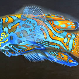 Mandarin Dragonet by Phyllis Beiser