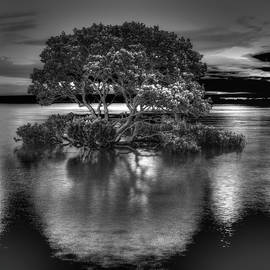 Mangrove at High Tide by Bette Devine