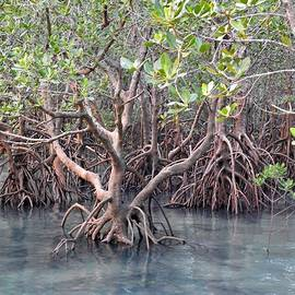 Mangroves by Athol KLIEVE