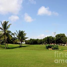 Manicured grass and palm trees at golf and country club Karachi Pakistan by Imran Ahmed