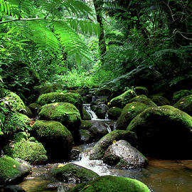 Manoa Rainforest Stream Moss by Kevin Smith