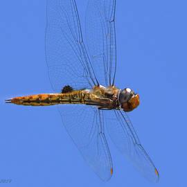 Manually Focused Dragonfly, In Flight by Brian Tada