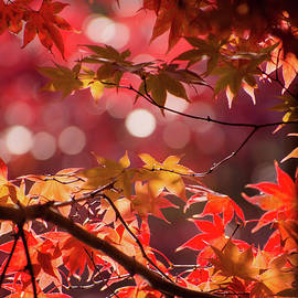 Maple and Bokeh by Mary Ann Artz