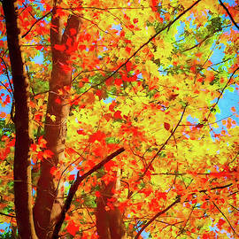 Maple Autumn Glory ap by Dan Carmichael
