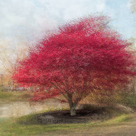 Maple By The Pond by Alan Brown
