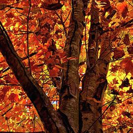 Maple Kaleidoscope by Shari Stamford Krause