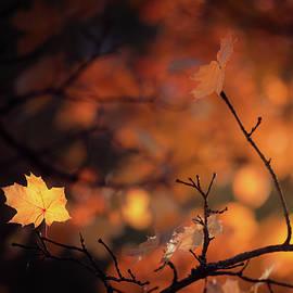 Maple leaf at autumn by Juhani Viitanen