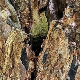 Maple Tree Trunk by Jerry Abbott