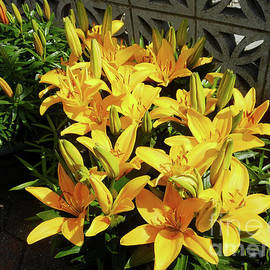 Sunkissed Yellow Lilies by Kathryn Jones