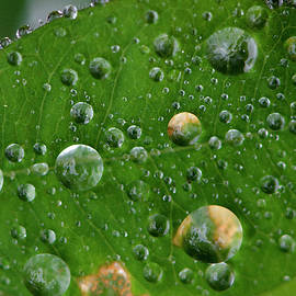 Marco Landscape, Rain on a Leaf, Photography in the North Carolina Uwharrie National Forest, Print by Eric Abernethy