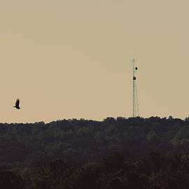 Marco.. - SERIES - Nature Photography - Black Bird by Nicole Chisholm