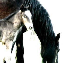 Mare And Foal 32 V by Lynne Iddon