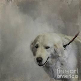 Maremma Sheepdog Portrait by Eva Lechner