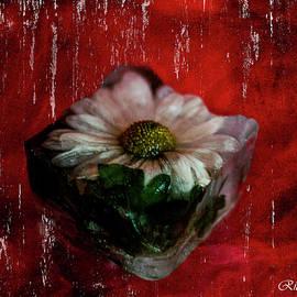 Frozen daisy with red blackground by Rita Di Lalla