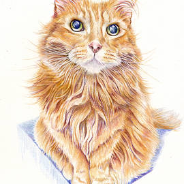 Marmalade Cat - The Silent Miaow by Debra Hall