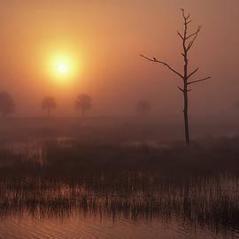 Marsh Bird at Sunrise by Bill Chambers