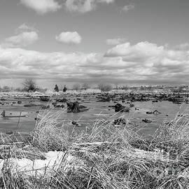 Marsh BW by Len Tauro