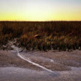 Marsh Trickle by Bill Chambers