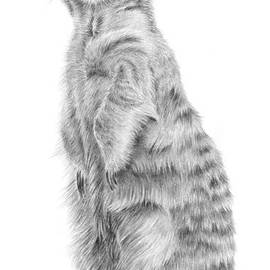 Marvin the Meerkat by Pencil Paws